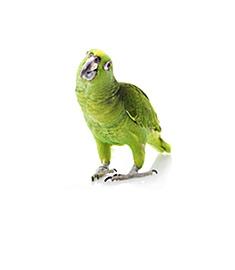 Птицам